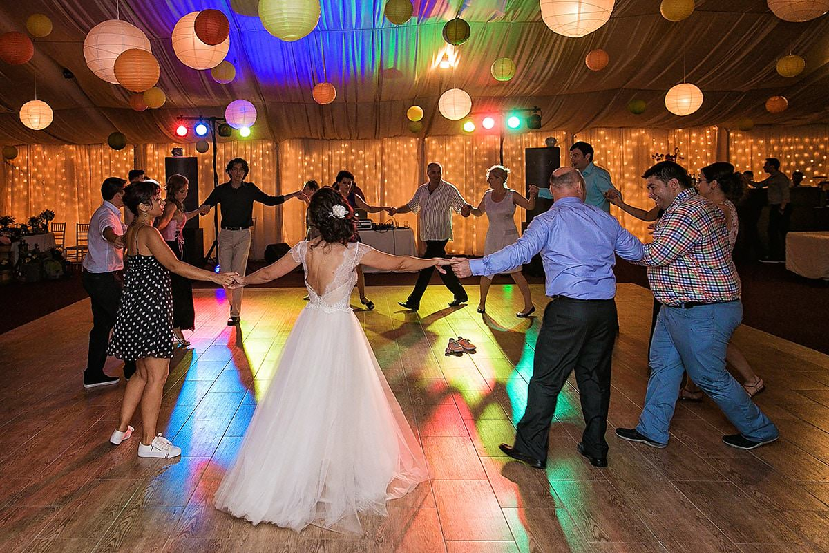 Fotografii de nunta cu Pusa si Foca